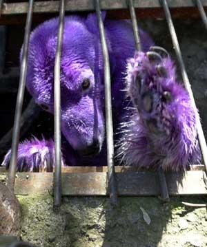 Purple And Green Polar Bears